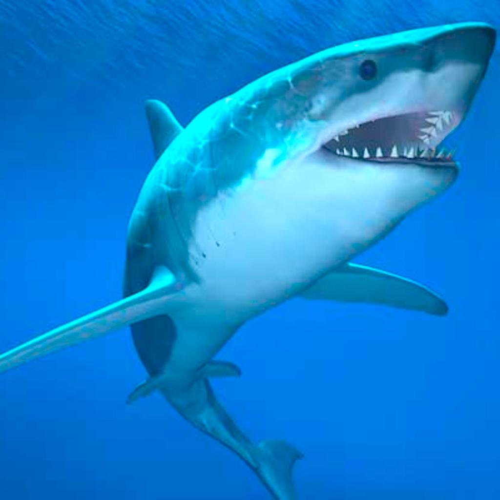 Big Hungry Shark